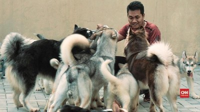 Anjing-anjing 'Keluarga' Agus Susilo