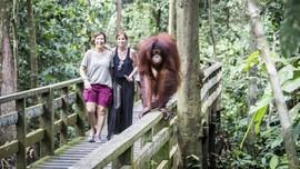 5 Lokasi Wisata Observasi Orangutan