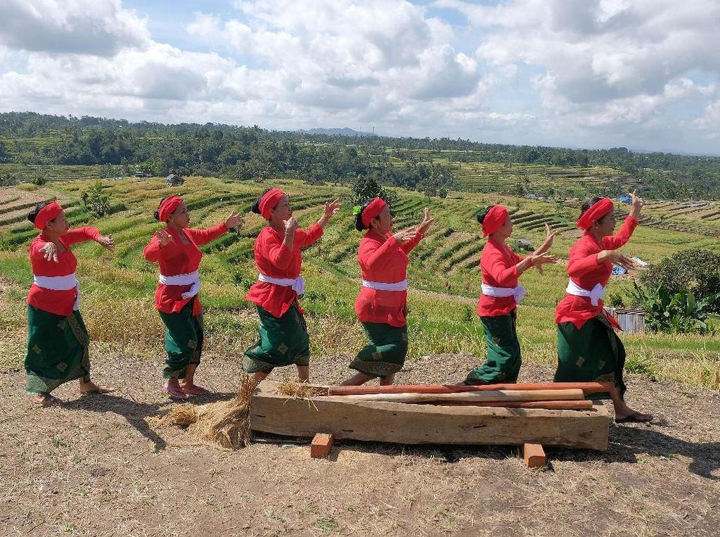 Seniman menampilkan tari Numbug Lesung saat merayakan musim panen di Desa Jatiluwih, Tabanan, Bali, Sabtu (15/6/2019). Kegiatan itu untuk meningkatkan kunjungan wisatawan sekaligus mempertahankan budaya pertanian Bali beserta organisasi Subak di kawasan yang telah ditetapkan sebagai warisan budaya oleh UNESCO tersebut. ANTARA FOTO/Nyoman Hendra Wibowo.