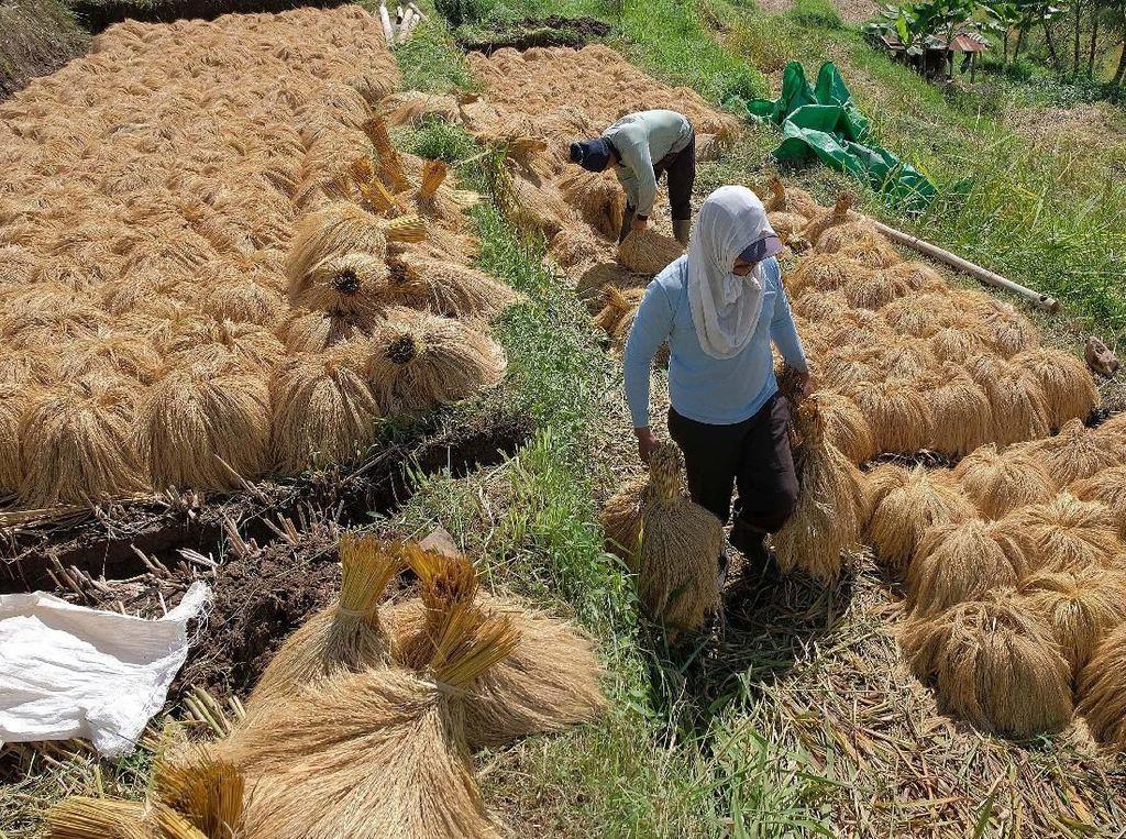 Petani di kawasan pertanian yang telah ditetapkan sebagai warisan budaya oleh UNESCO tersebut saat ini berupaya mempertahankan eksistensi Subak beserta budaya pertaniannya untuk bisa menopang pariwisata di daerah itu. ANTARA FOTO/Nyoman Hendra Wibowo.