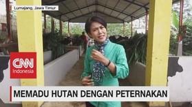 VIDEO: Memadu Hutan Dengan Peternakan (1-5)