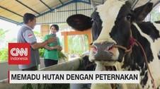 VIDEO: Memadu Hutan Dengan Peternakan (3-5)