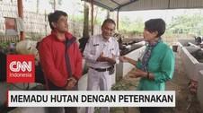 VIDEO: Memadu Hutan Dengan Peternakan (2-5)