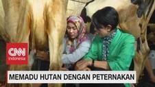 VIDEO: Memadu Hutan Dengan Peternakan (4-5)