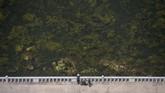 Perairan Sungai Taedong di Pyongyang, Korea Utara, yang dipenuhi oleh tumbuhan alga.