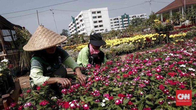 Selain Lidah Mertua, Urban Farming Juga Bisa Kurangi Polusi