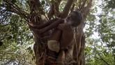 Seorang penganut Hindu melakukan yoga di sebuah pohon berdekatan dengan Sungai Gangga, Prayagraj, India, Senin (17/6). (REUTERS/Jitendra Prakash)