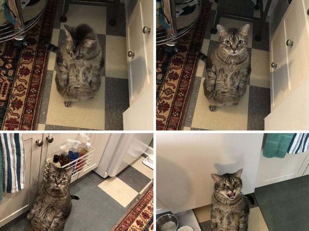 Dengan sikap tegak kucing ini meminta makanan kepada majikannya. Melihat aksi kucingnya yang menggemaskan itu ia pun membuat cuitan di akun Twitternya berisi dia berdiri di belakang kakinya ketika dia ingin makanan. Istimewa/Dok. Boredpanda/bastardrobocop.
