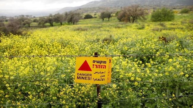 Ladang ranjau di bawah semak-semak di Dataran Tinggi Golan. PM Israel, Benjamin Netanyahu, kini menamakan daerah itu Dataran Tinggi Trump. (REUTERS/Ronen Zvulun)