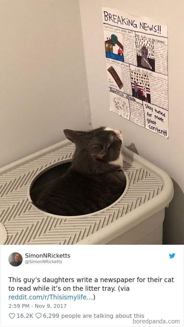 Kumpulan Foto Cuitan tentang Kucing Ini Bikin Gemas
