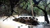 Sebuah tank Suriah terbalik di Sungai Hermon di Kawasan Lindung Banias, Dataran Tinggi Golan. (REUTERS/Ronen Zvulun)