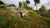 Bekas gudang amunisi pasukan Suriah di Dataran Tinggi Golan kini ditumbuhi rerumputan. (REUTERS/Ronen Zvulun)