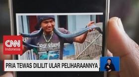 VIDEO: Ngeri! Pria Tewas Dililit Ular Peliharaannya Sendiri