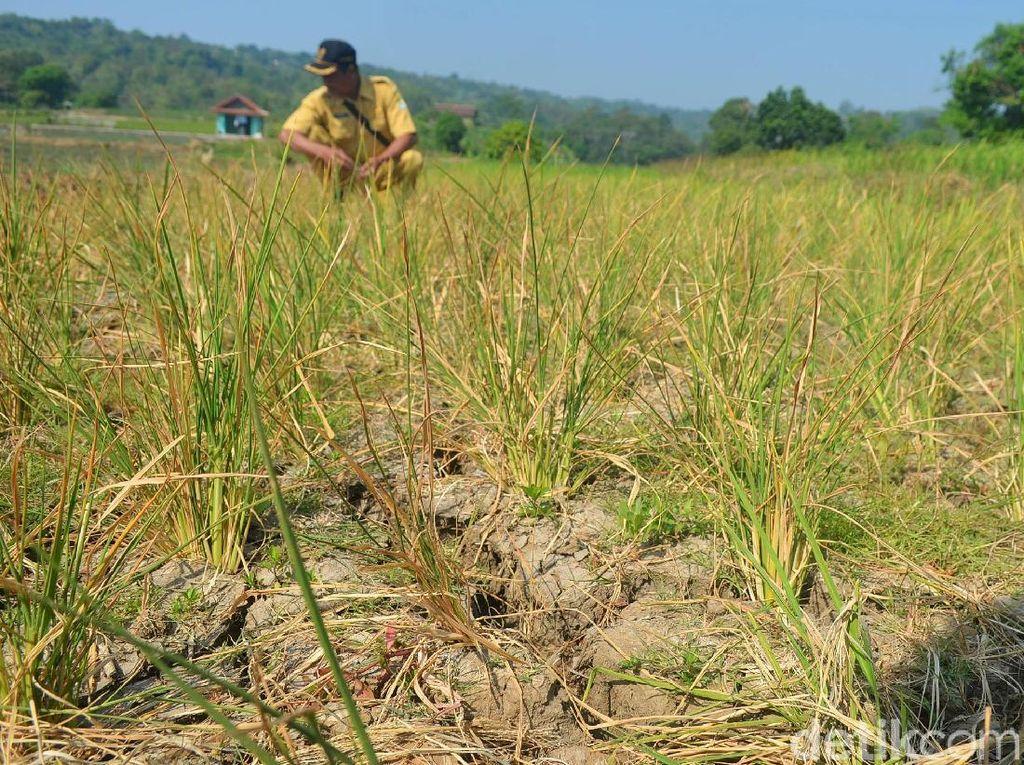 Minimnya sumber mata air di wilayah Sinarrancang menjadi salah satu faktor penyebab kekeringan.