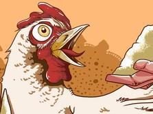 Harga Ayam Anjlok Lagi, Emiten Unggas Kompak Memerah