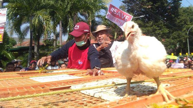 CPIN Pemerintah Batasi Produksi Ayam, Ini Arah Saham Emiten Unggas