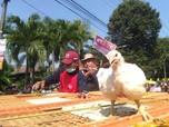Pemerintah Batasi Produksi Ayam, Ini Arah Saham Emiten Unggas