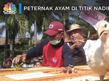Melihat Aksi Para Peternak Sebar Ribuan Ayam Gratis
