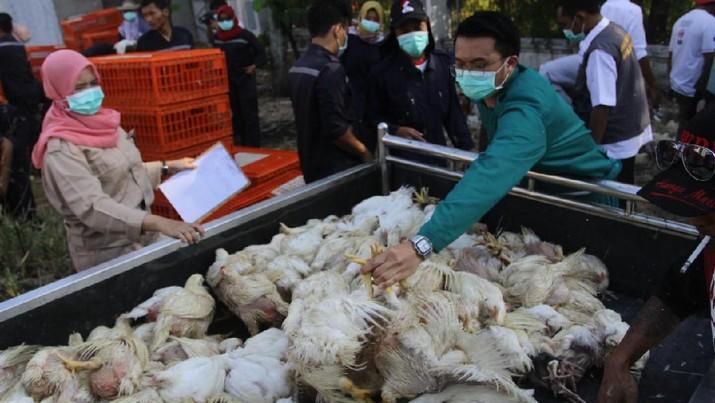 Ada Bagi-Bagi Ayam Gratis, Warga Semarang Antre