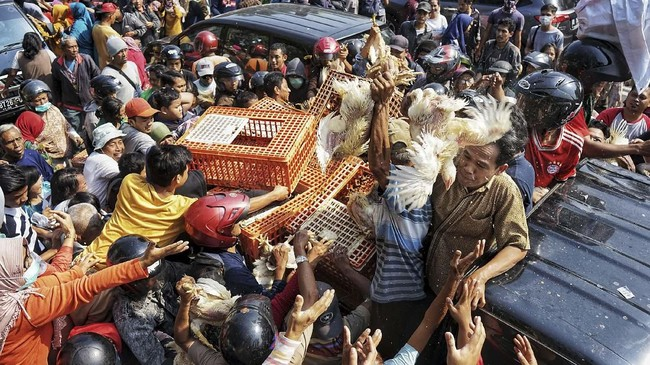 Sebanyak 5.000 ekor ayam dibagikan secara gratis kepada warga Yogyakarta sebagai bentuk sikap atas anjloknya harga ayam broiler yang membuat rugi di tingkat peternak. (ANTARA FOTO/Andreas Fitri Atmoko).