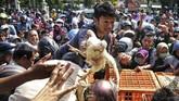 Warga berebut ayam saat pembagian ayam gratis oleh Asosiasi Peternak Ayam Yogyakarta di Balaikota Yogyakarta, Rabu (26/6). (ANTARA FOTO/Andreas Fitri Atmoko).