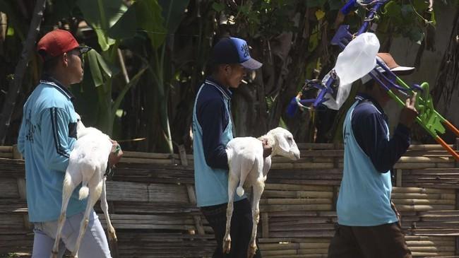 Joki menggendong kambing peliharaannya menjelang karapan kambing di Probolinggo, Jawa Timur. Hiburan rakyat ini biasanya diadakan saat memasuki musim panen, acara Agustusan, ataupun lomba desa. (ANTARA FOTO/Zabur Karuru)