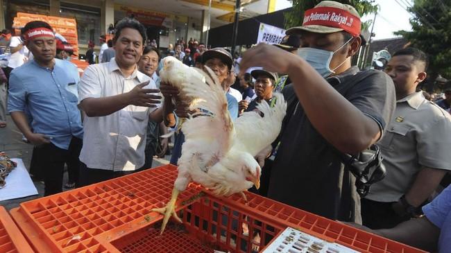Peternak juga membagikan ayam gratis saat unjuk rasa di depan Kantor Bupati Klaten, Jawa Tengah. (ANTARA FOTO/Aloysius Jarot Nugroho).