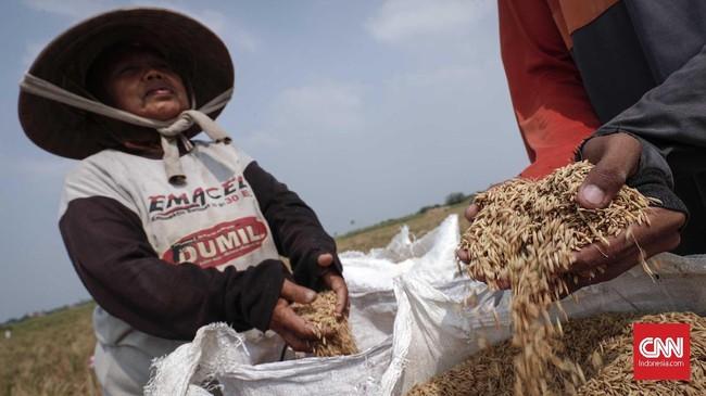 Selain kekeringan, luas lahan pertanian yang semakin berkurang juga membuat produksi beras nasional menurun. (CNNIndonesia/Safir Makki)