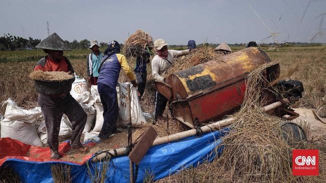 Sementara Kementerian Pertanian menargetkan produksi padi tahun ini mencapai 84 juta ton atau setara 49 juta ton beras.(CNNIndonesia/Safir Makki)
