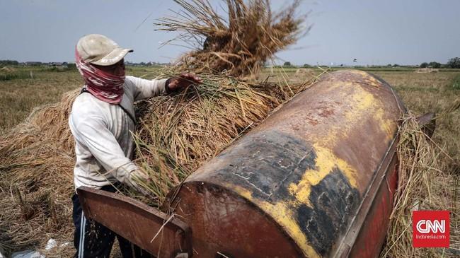Berdasarkan data BPS, produksi padi tahun lalu mencapai 32,5 juta ton setara beras.(CNNIndonesia/Safir Makki)