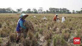 Kenaikan Harga Pangan 'Angkat' Daya Beli Petani dan Nelayan