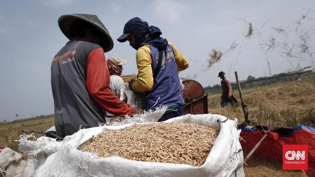 Namun, akibat musim kemarau yang menyebabkan beberapa wilayah kekeringan, produksi beras nasional diperkirakan akan berkurang sebanyak 2 juta ton dibanding tahun lalu. (CNNIndonesia/Safir Makki)