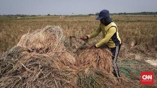 Amran Klaim Aturan Batas Edar Varietas Lindungi Petani
