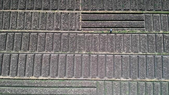 Foto udara areal persawahan mengalami kekeringan di Desa Banjar Anyar, Brebes, 17 Juni 2019. BPBD Jateng, mencatat 1.259 desa dari 360 kecamatan di sana mengalami kekeringan dan berdampak minimnya pasokan air ke persawahan. (ANTARA FOTO/Oky Lukmansyah)
