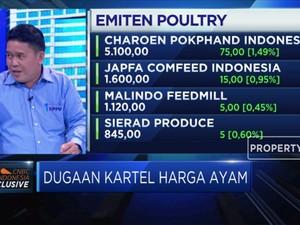 Benarkah Kartel Penyebab Anjloknya Harga Ayam ?