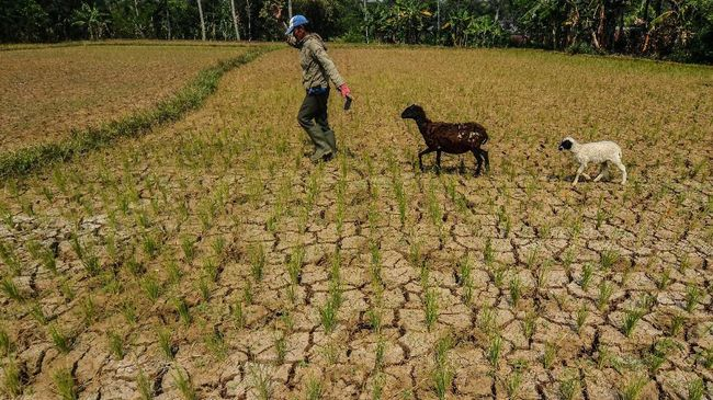 Kemarau Panjang, Krisis Air Bersih Meluas di Sejumlah Wilayah