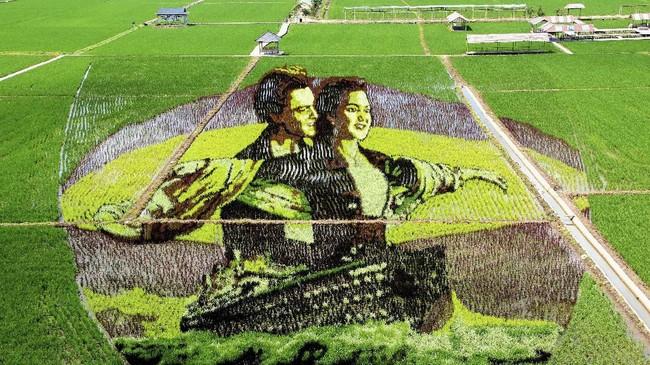 Di Shenyang, China, berbagai varietas padi dibentuk menjadi gambar dua karakter dari film Titanic. (Photo by STR / AFP) / China OUT