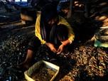 Potret Pekerja Kerang Hijau yang Hidup dengan Upah Rp 30 ribu