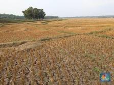 Wah, Spekulan Tanah Bakal Kena Pajak Progresif