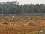 Nih Penjelasan Menteri ATR Soal Wacana Pajak Progresif Tanah