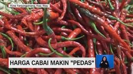 VIDEO: Harga Cabai Makin