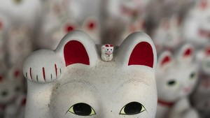 FOTO: Kuil Kucing Pembawa Keberuntungan di Jepang