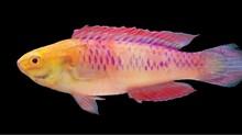 Ikan Wakanda dan Temuan 71 Spesies Hewan-Tumbuhan Baru 2019