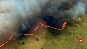 VIDEO: Api Lalap Cagar Alam Meksiko, 2.500 Vegetasi Rusak