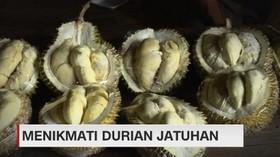 VIDEO: Menikmati Durian Jatuhan