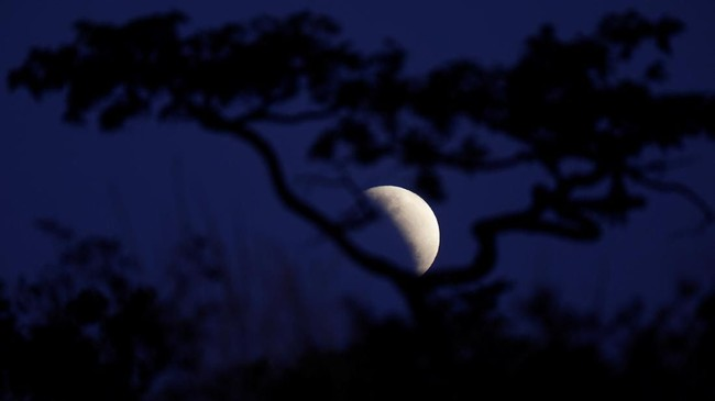 Saat terjadi gerhana sebagian, Bulan terlihat berwarna gelap, merah, tembaga, jingga, atau coklat. (REUTERS/Ueslei Marcelino)