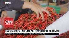 VIDEO: Harga Cabai Melonjak Mencapai RP 150 Ribu di Jambi