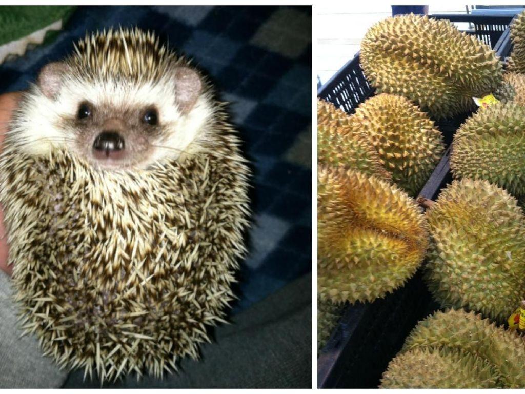 Bikin Gemas! Pose Para Hewan Imut Ini Malah Mirip Seperti Makanan