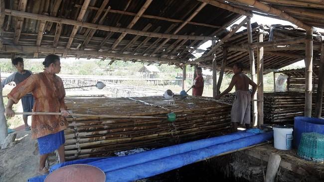 Air dari penampungan kemudian akan dipindahkan ke bilahan bambu atau klakah.(ANTARA FOTO/Yusuf Nugroho)