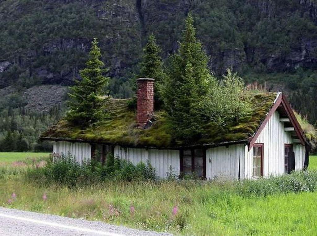 Penampakan Bangunan yang Dimakan Alam